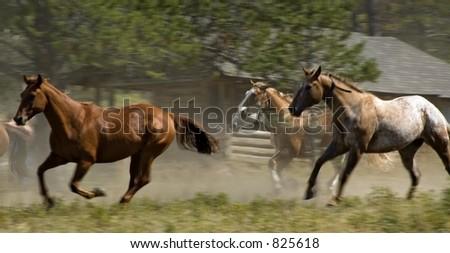 Horses Racing Past - Motion Blur - stock photo