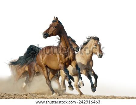 horses run in a wild - stock photo