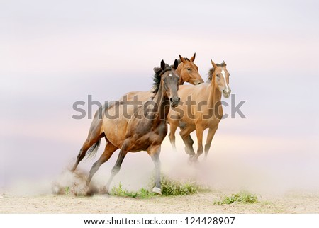 horses running - stock photo