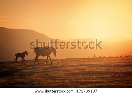 horses silhouette at sunset with haze - stock photo