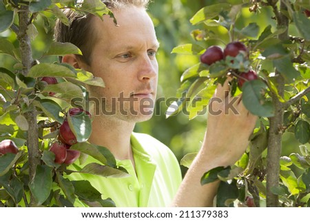 Horticulturist checking his appletrees on his farm  - stock photo