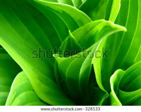 Hosta Plant - stock photo