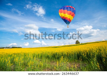 Hot air balloon over yellow flower fields against blue sky - stock photo