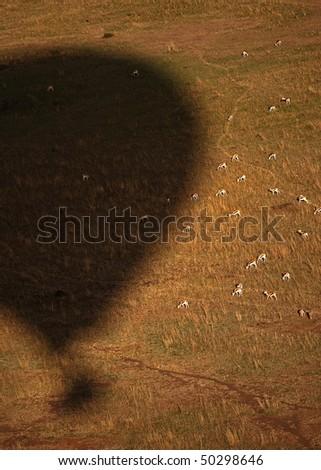 Hot baloon shadow and Impala. Taken from the hotbaloon. - stock photo