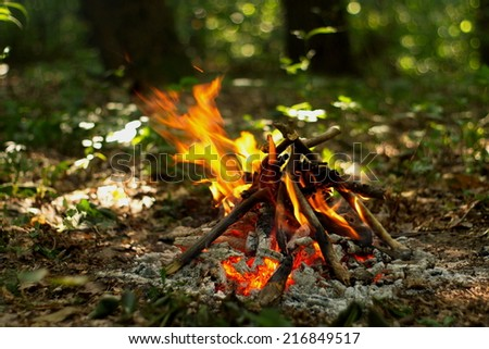 hot flame of campfire in forest - stock photo