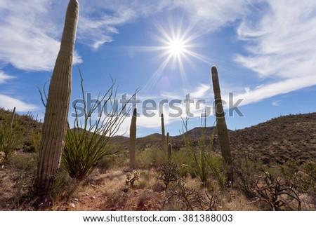 Hot sun over Saguaro National Park near Tucson, Arizona, US, between green Sonoran Desert vegetation and iconic Saguaro cacti, Carnegiea gigantea - stock photo
