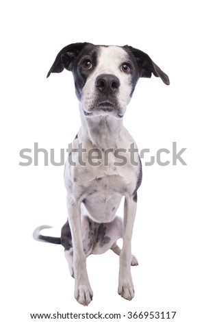 Hound dog sitting looking forward isolated on white - stock photo