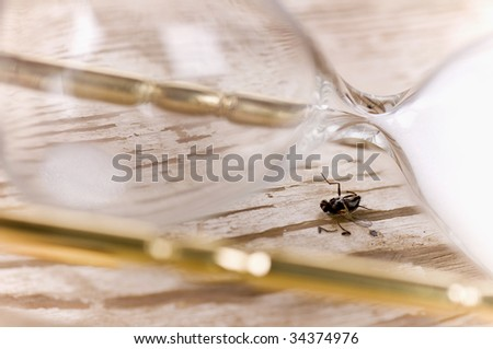 hourglass and fly - stock photo