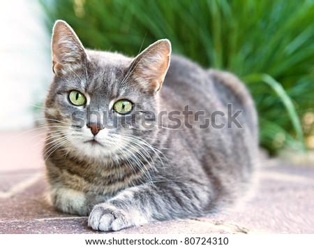 house cat - stock photo