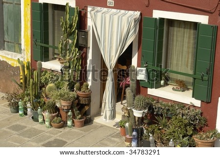 House entrance full of cactus. - stock photo