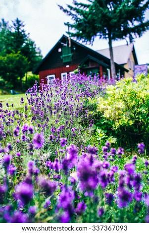 House Farm in Japan - stock photo