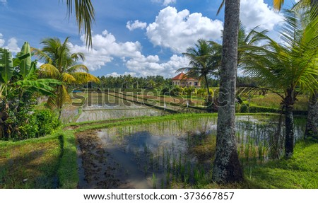 House on rice field at the town of Ubud in Bali in sunny summer day - stock photo