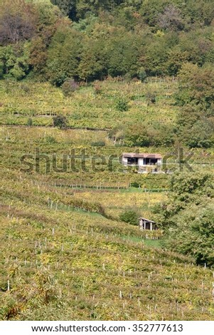 house on the hill with vineyards - stock photo