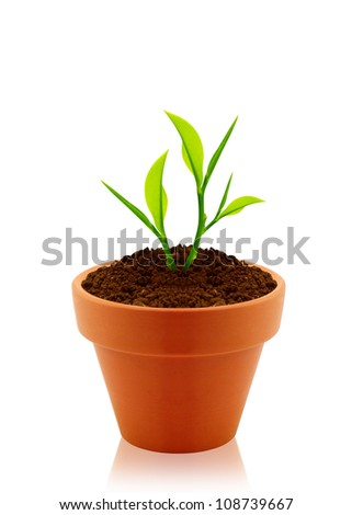 House plant in clay pot isolated on white background. - stock photo
