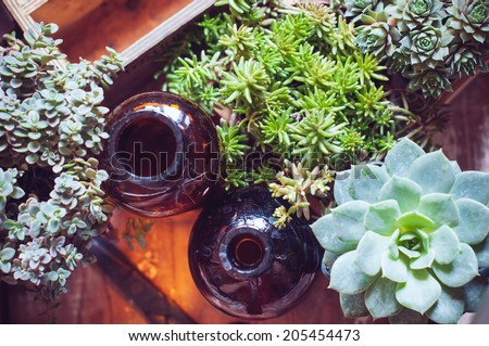 House plants, green succulents, old wooden box and brown vintage glass bottles on a wooden board, home gardening and decor rustic style. - stock photo