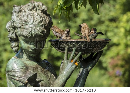 House Sparrow (Passer domesticus) drinking and bathing in bird bath in Central Park - stock photo