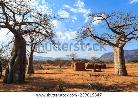 House surrounded by baobab trees in Africa, Tanzania - stock photo