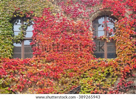 House windows with colorful vines and autumn leaves in Germany
