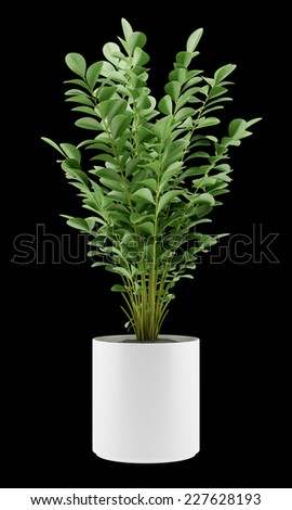 houseplant in pot isolated on black background - stock photo