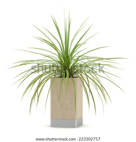 houseplant in wooden pot isolated on white background - stock photo