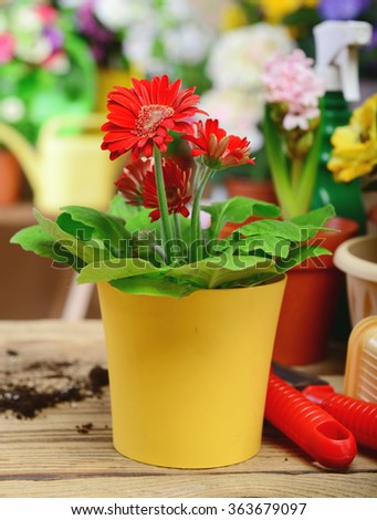 houseplants in a pot on a wooden table - stock photo