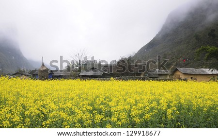 Houses of ethnic people near rapeseed garden in Hagiang province, Vietnam - stock photo
