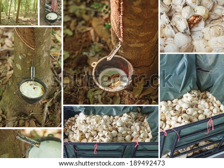 how it's made: natural indian rubber processing - stock photo