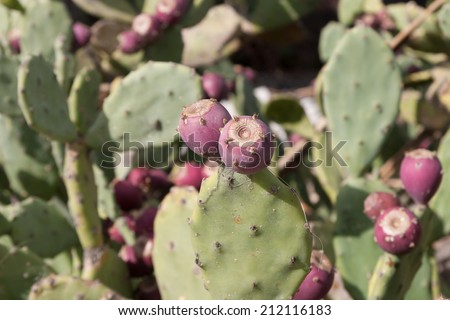 Huge Cactus green tree at summer day - stock photo