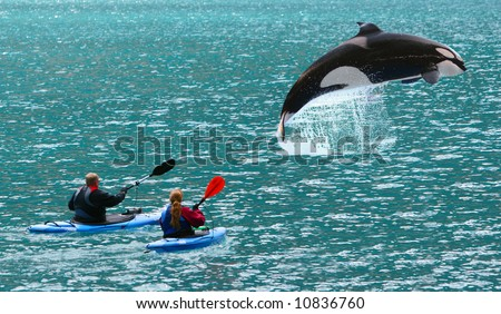 Huge killer whale jumped in front of two sea kayaks - Alaska USA - stock photo