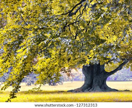 Huge oak tree in the park - stock photo