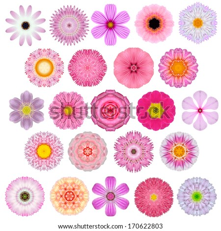 Huge Selection of Various Colorful  Kaleidoscopic Mandala Flowers Isolated on White. Big Collection of flowers in Concentric shape pattern. Rose, Daisy Flowers in Red, Yellow, Orange, Purple colors. - stock photo