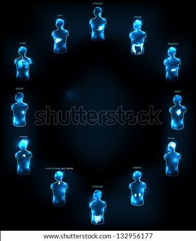 Human anatomy concept. Abstract medical wallpaper. Various human organs: liver, heart, kidneys, lungs, colon, intestine, stomach, brains, etc. Ad Your text at the middle if necessary - stock photo