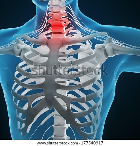 Human anatomy illustration - skeleton and central nervous system - stock photo