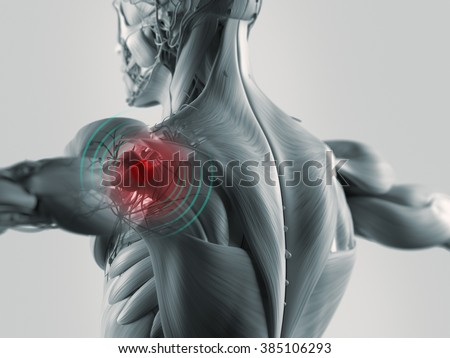 Human anatomy shoulder highlighted in red.  - stock photo