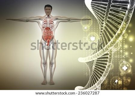 human anatomy with dna - stock photo
