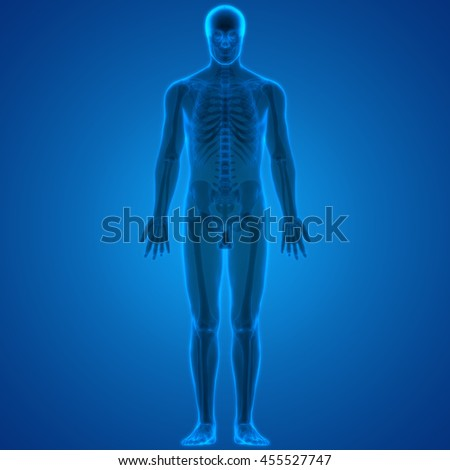 Human Body Bone Joint Pains. 3D - stock photo