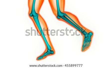 Human Body Bone Joint Pains (Foot joints and Bones). 3D - stock photo