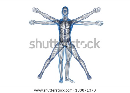 Human body of a Vitruvian man for study on white - stock photo