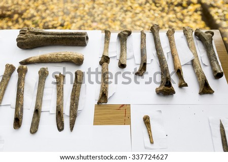Human bones are shown on a table from archaeological excavions in Bulgaria. - stock photo
