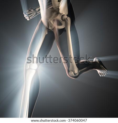 human bones radiography scan image - stock photo