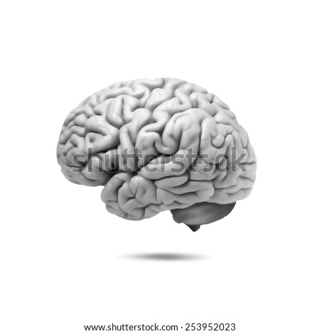 human brain and white background - stock photo