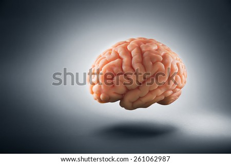 Human brain floating on a grey background - stock photo