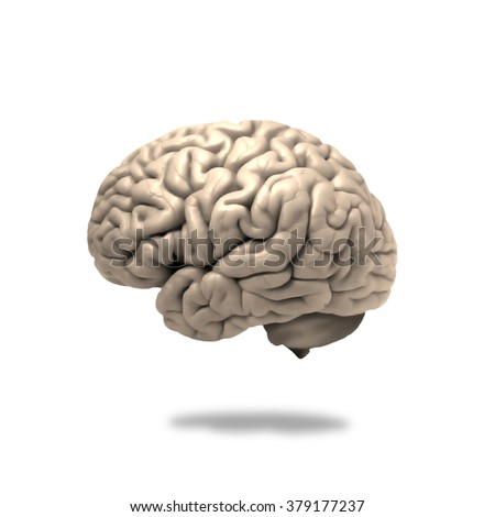 human brain isolated and white background - stock photo