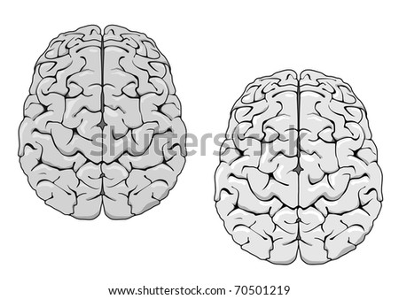 Human brain isolated on white as a concept of medicine. Vector version also available in gallery in gallery - stock photo