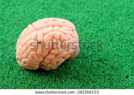 human brain model on green grass background - stock photo