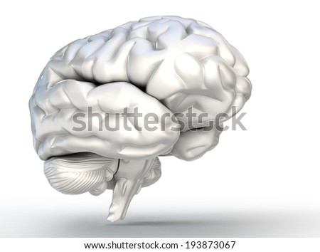 human brain model on white background. clipping patn included - stock photo