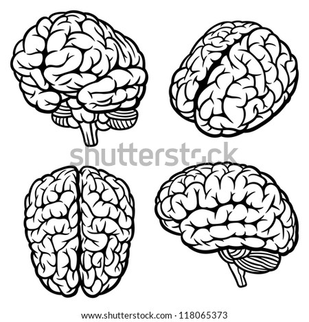 Human Brain. Set of four views. Rasterized version - stock photo