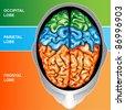 Human brain view top - stock photo