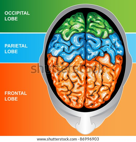 Human brain view top - stock photo