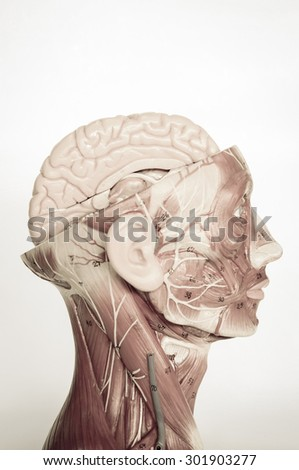 human brain with old style - stock photo